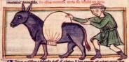 donkey Middle Ages